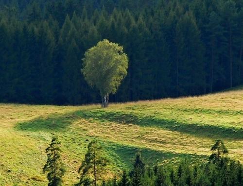 Léčivé účinky stromů