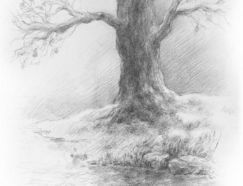 O slovech i stromech