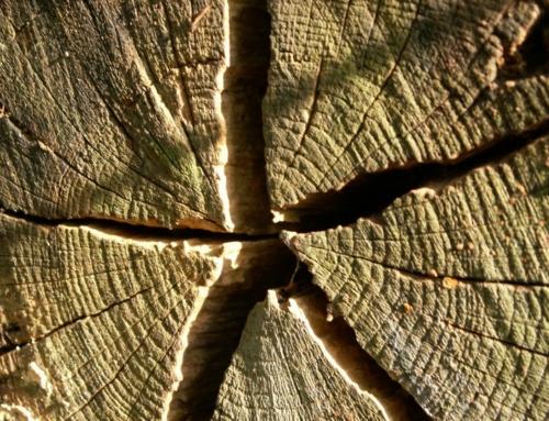 Blízké setkání se dřevem