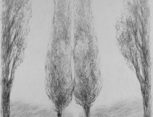 Topol v keltském stromokruhu